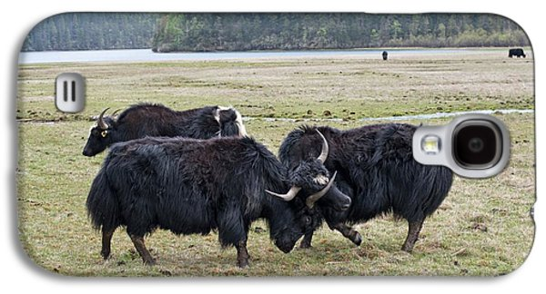 Yaks Fighting In Potatso National Park Galaxy S4 Case by Tony Camacho