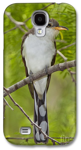 Yellow-billed Cuckoo Galaxy S4 Case by Anthony Mercieca