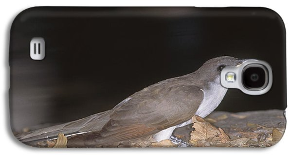 Yellow-billed Cuckoo Galaxy S4 Case by Gregory G. Dimijian, M.D.