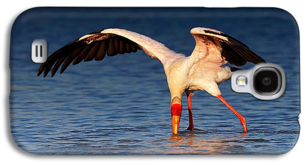 Yellow-billed Stork Hunting For Food Galaxy S4 Case