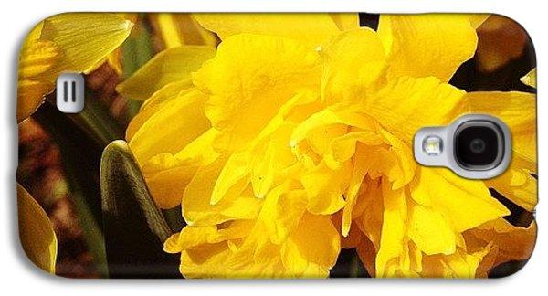 Yellow Daffodils Galaxy S4 Case