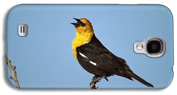 Yellow-headed Blackbird Singing Galaxy S4 Case by Tom Vezo