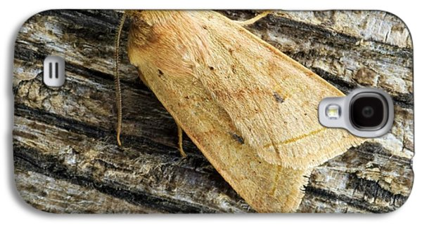 Yellow Line Quaker Moth Galaxy S4 Case by David Aubrey