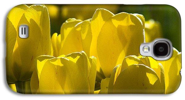 Yellow Tulips  Galaxy S4 Case