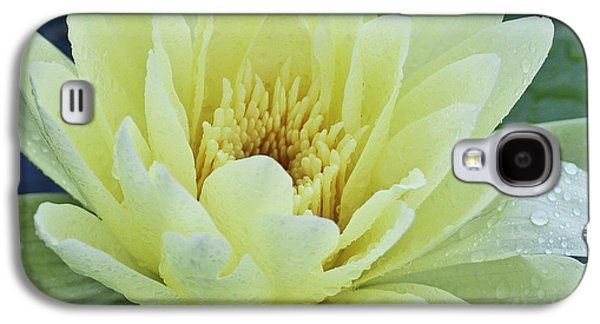Yellow Water Lily Nymphaea Galaxy S4 Case