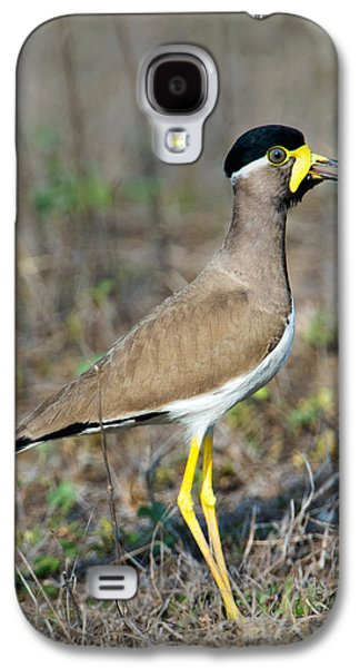 Yellow-wattled Lapwing Vanellus Galaxy S4 Case