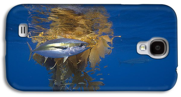 Yellowfin Tuna And Kelp Nine-mile Bank Galaxy S4 Case