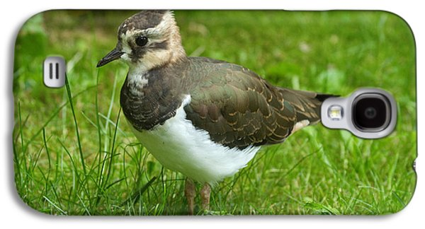 Lapwing Galaxy S4 Case - Young Lapwing by Helmut Pieper