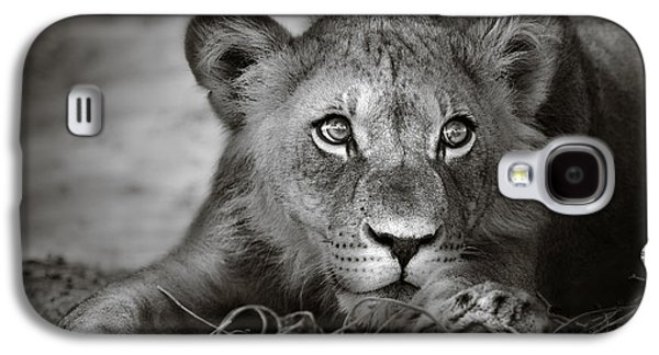 Lion Galaxy S4 Case - Young Lion Portrait by Johan Swanepoel