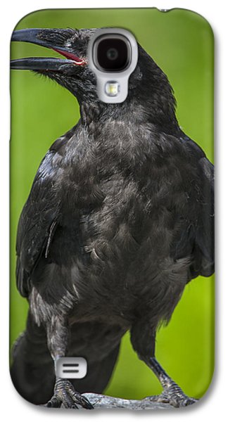 Young Raven Galaxy S4 Case by Tim Grams