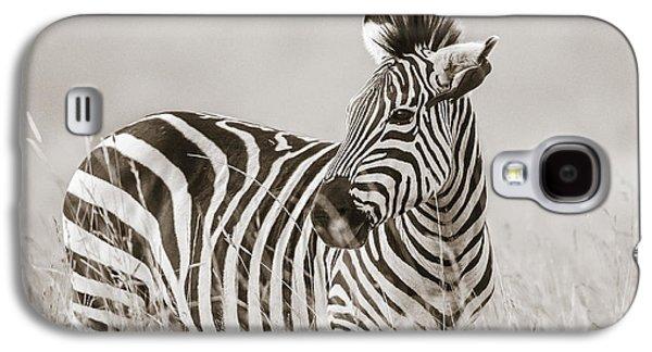 Zebra Masai Mara Kenya Galaxy S4 Case