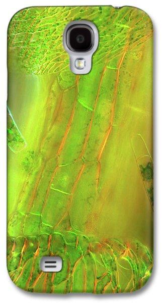 Zygnema Algae On Sphagnum Moss Galaxy S4 Case by Marek Mis