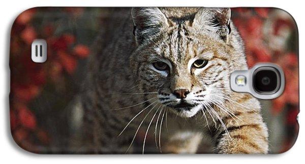 Bobcat Felis Rufus Walks Along Branch Galaxy S4 Case by David Ponton