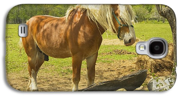 Horse Near Strone Wall In Field Spring Maine Galaxy S4 Case by Keith Webber Jr