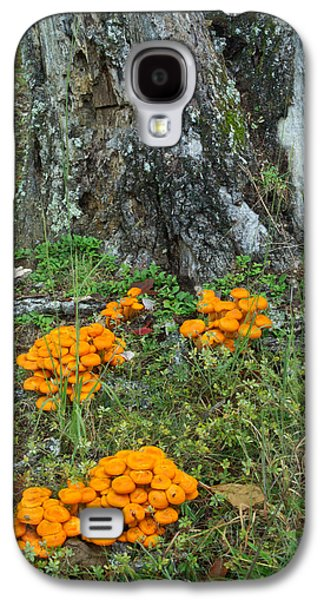 Jack Olantern Mushrooms 16 Galaxy S4 Case by Douglas Barnett