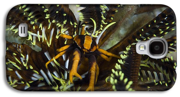 Orange And Brown Elegant Squat Lobster Galaxy S4 Case