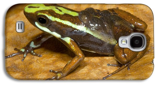 Poison Frog With Eggs Galaxy S4 Case by Dante Fenolio