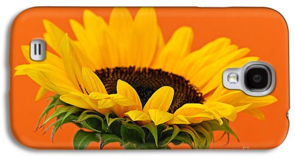 Sunflower Galaxy S4 Case - Sunflower Closeup by Elena Elisseeva