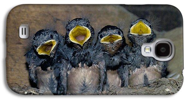 Swallow Chicks Galaxy S4 Case by Georgette Douwma