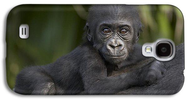 Western Lowland Gorilla Gorilla Gorilla Galaxy S4 Case by San Diego Zoo