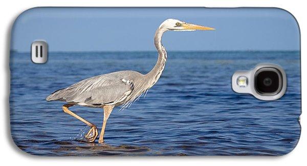 Wurdemann's Heron Galaxy S4 Case