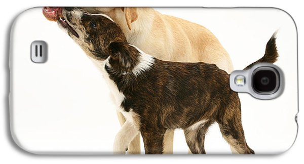 Dogs Playing Galaxy S4 Case by Mark Taylor