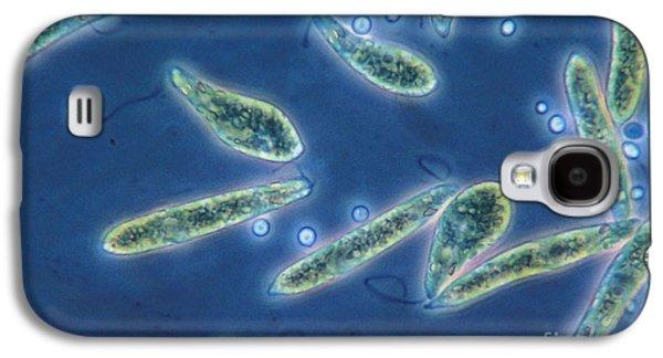 Euglena Gracilis, Lm Galaxy S4 Case
