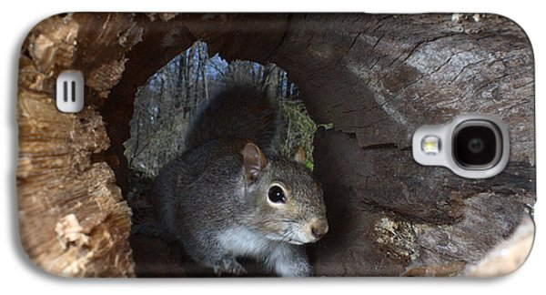 Gray Squirrel Galaxy S4 Case by Ted Kinsman