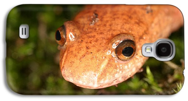 Spring Salamander Galaxy S4 Case by Ted Kinsman