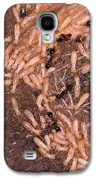 Termite Nest Reticulitermes Flavipes Galaxy S4 Case