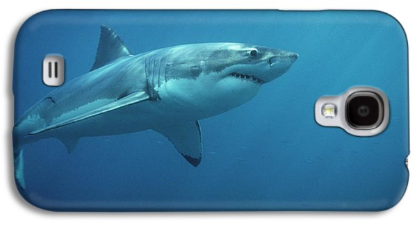 Sharks Galaxy S4 Case - Great White Shark Carcharodon by Mike Parry