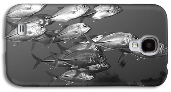 A School Of Bigeye Trevally, Papua New Galaxy S4 Case