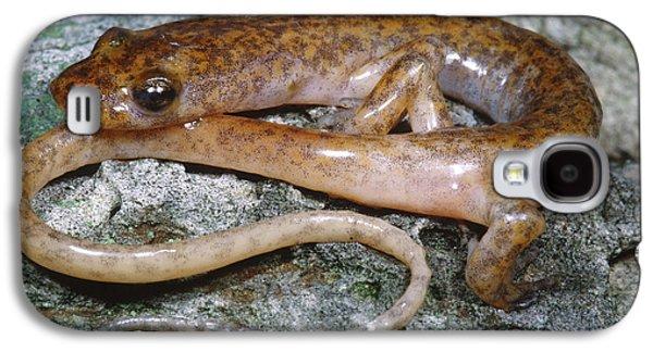 Cave Salamander Galaxy S4 Case by Dante Fenolio
