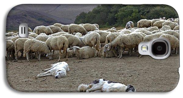 Flock Of Sheep Galaxy S4 Case by Joana Kruse