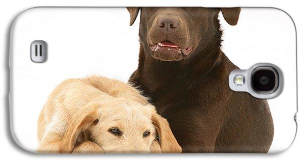 Labradoodle And Labrador Retriever Galaxy S4 Case by Jane Burton