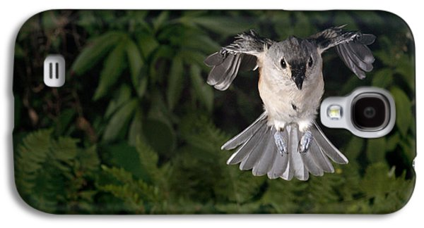 Tufted Titmouse In Flight Galaxy S4 Case by Ted Kinsman