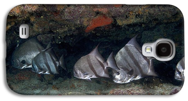 A School Of Atlantic Spadefish Galaxy S4 Case