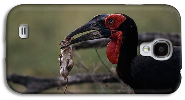 A Southern Ground Hornbill Prepares Galaxy S4 Case