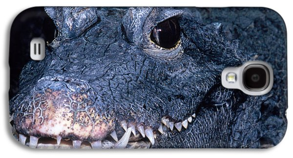 African Dwarf Crocodile Galaxy S4 Case by Dante Fenolio