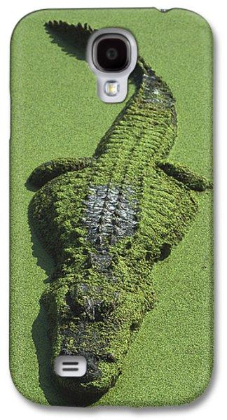 American Alligator Alligator Galaxy S4 Case by Heidi & Hans-Juergen Koch