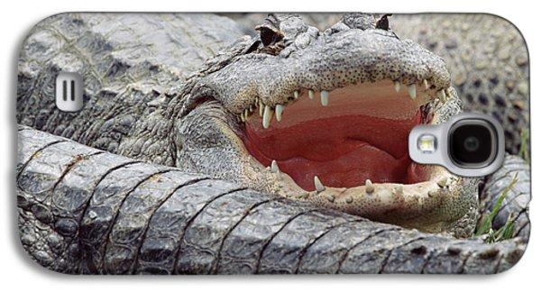 American Alligator Alligator Galaxy S4 Case by Tim Fitzharris