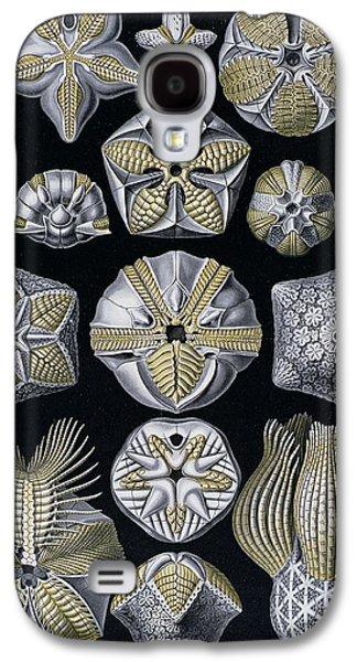 Artforms Of Nature Galaxy S4 Case by Ernst Haeckel