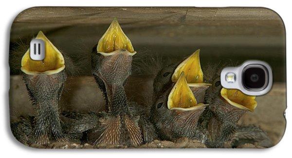 Barn Swallow Hirundo Rustica Chicks Galaxy S4 Case