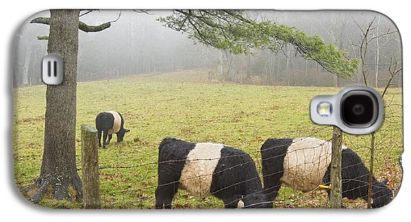 Belted Galloway Cows On Farm In Rockport Maine Photograph Galaxy S4 Case by Keith Webber Jr