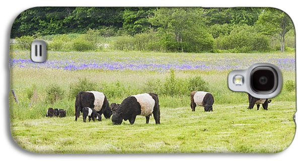 Belted Galloway Cows Pasture Rockport Maine Photograph Galaxy S4 Case