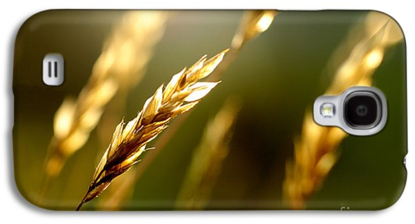 Blowing In The Wind Galaxy S4 Case by Thomas R Fletcher