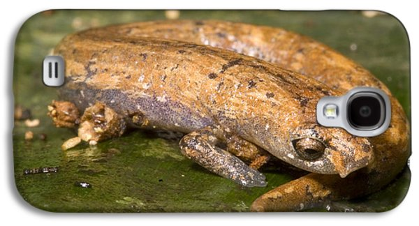 Bolitoglossine Salamander Galaxy S4 Case by Dante Fenolio