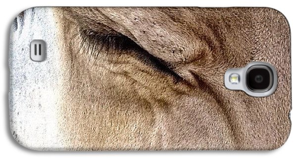Ohio Galaxy S4 Case - Brown Swiss Cow by Natasha Marco