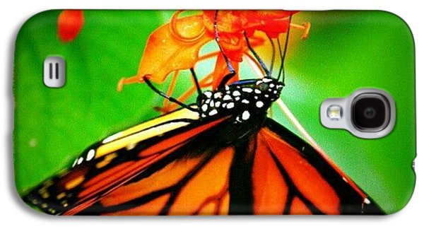 Colorful Galaxy S4 Case - #butterfly #pretty #colorful by Mandy Shupp