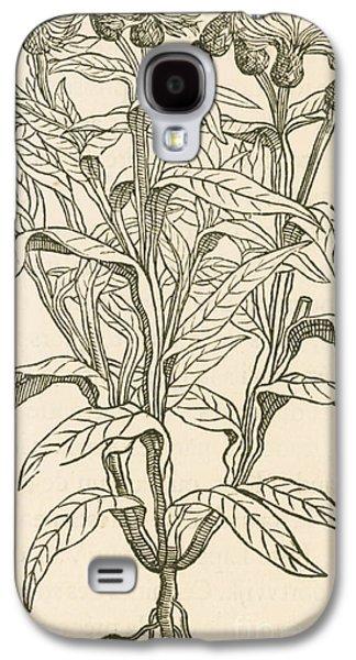 Centaurea Montana, Bachelors Button Galaxy S4 Case by Science Source